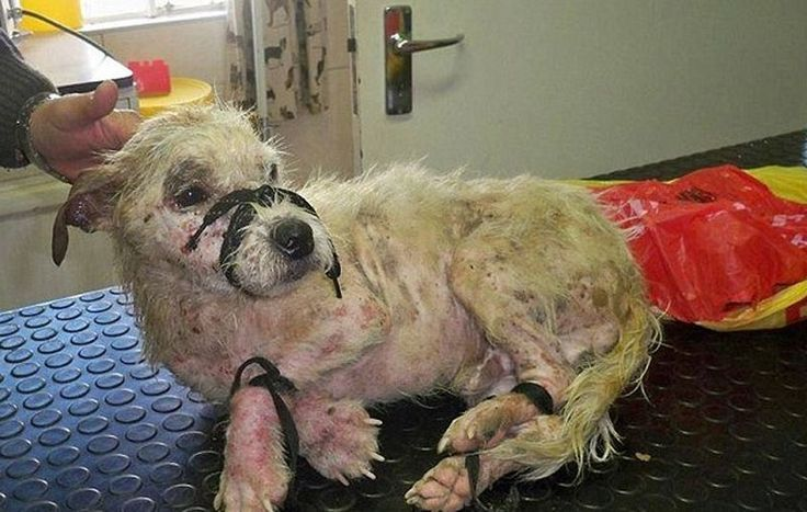 Связанную собаку бросили умирать на железнодорожные пути