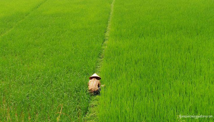 L'inconfondibile Vietnam.
