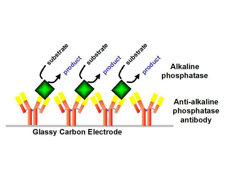http://liverbasics.com/alkaline-phosphatase-low.html What it means if your alkaline phosphatase is low and some of the most common causes for this condition.