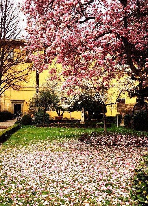 Giardino del Museo #Archeologico #Firenze, #magnolia giapponese