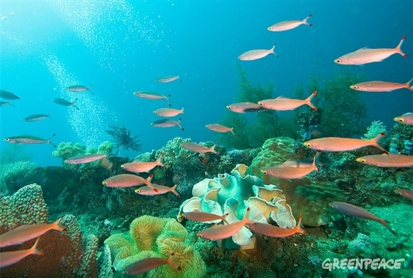 Chin chin por los océanos ¡pero sin bajar la guardia! | Greenpeace España