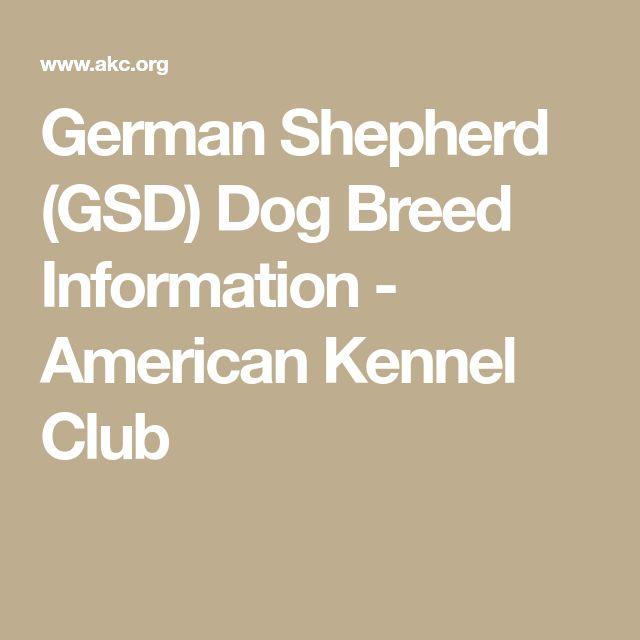 German Shepherd (GSD) Dog Breed Information - American Kennel Club