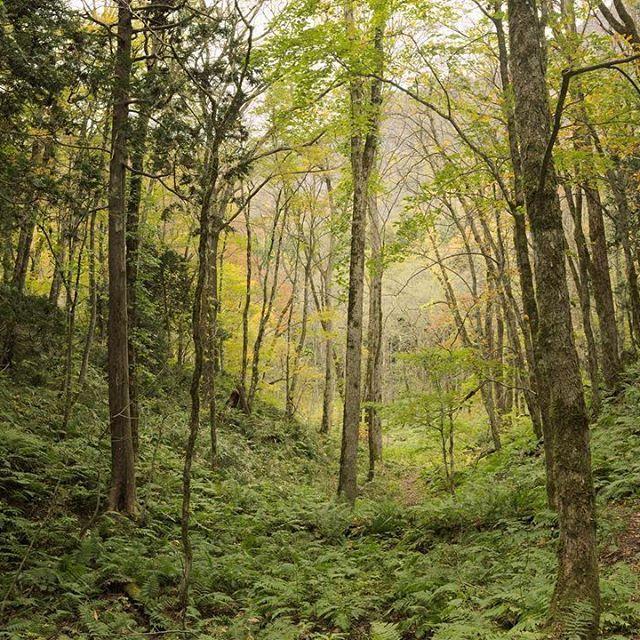 【tkmy.680】さんのInstagramをピンしています。 《歩いてきた道。 #白神山地 #白神山地十二湖 #白神山地遭難コース #森 #森林浴 #japen #Photo #日本 #写真 #風景 #景色 #tokyocameraclub #tkmyphoto #カメラ好きな人と繋がりたい #ファインダー越しの私の世界》