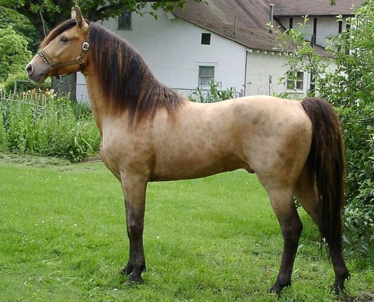 1000 Images About Horses Horses Horses On Pinterest