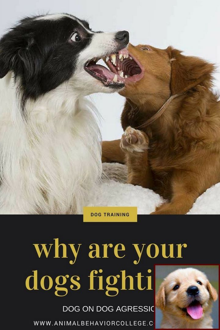 1 Have Dog Behavior Problems Learn About Books On House Training