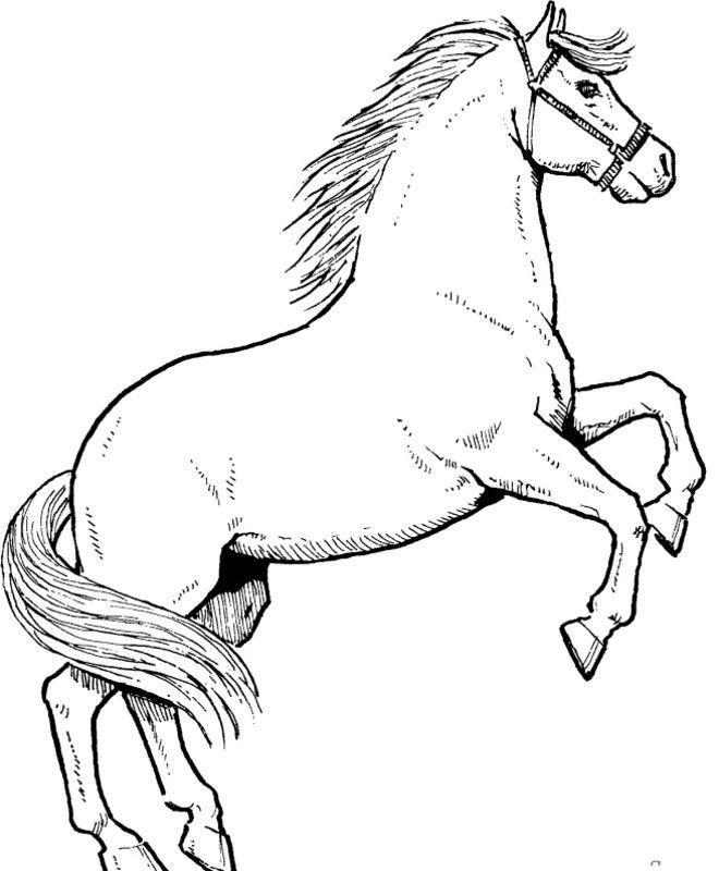 Znalezione Obrazy Dla Zapytania Kolorowanki Konie Konie