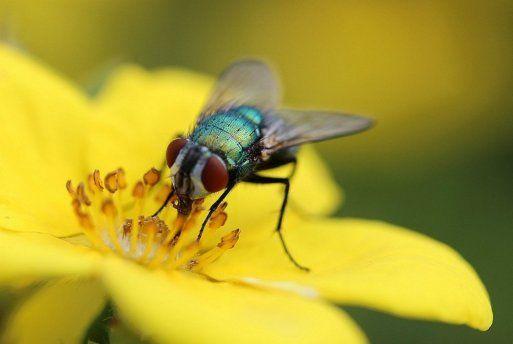Remedios caseros para las moscas tips para el hogar - Remedio contra las moscas ...