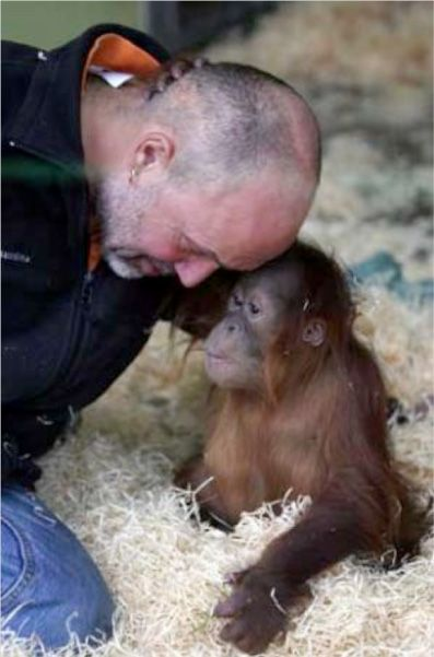 Silvestre the orphaned orang-utan gets new family at Monkey World. Audrey's adopted orang-utan