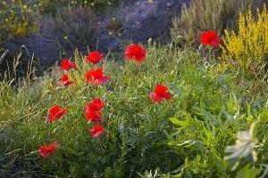 Некоторые вымирающие виды растений  http://www.dostavka-tsvetov.com/news/nekotorye_vymirajushhie_vidy_rastenij/2014-05-12-440