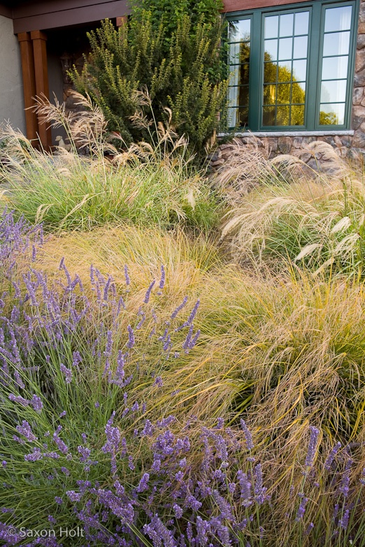 17 best images about gardening drought tolerant on for Ornamental grass design