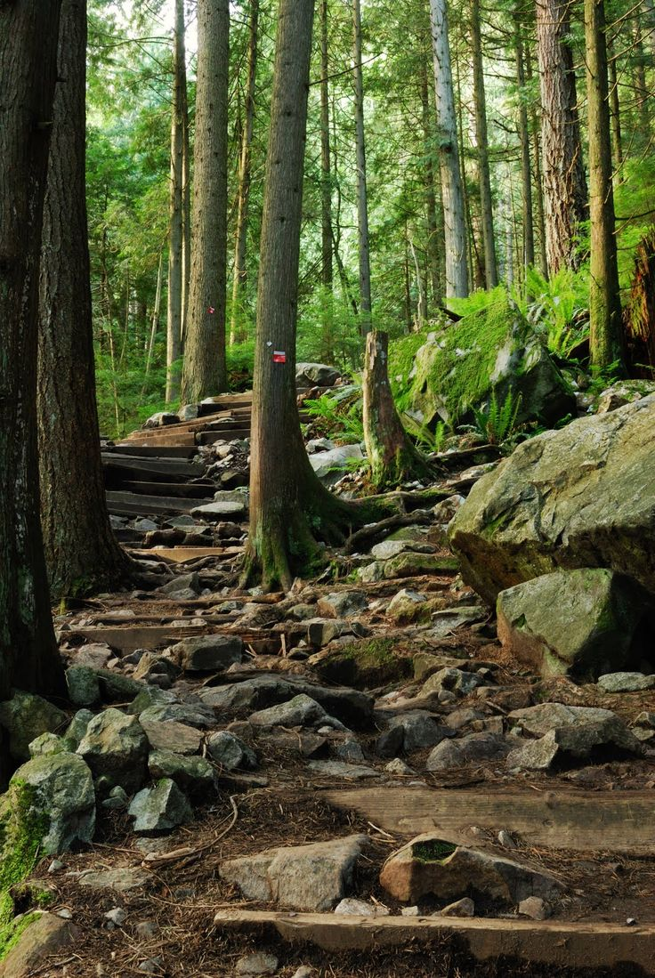 """The """"Grouse Grind"""" hiking trail up Grouse Mountain has a spectacular city skyline view at the top on a clear day."""