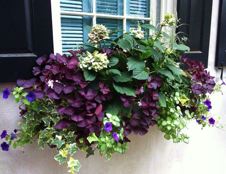 Charleston - Gardening Inspire