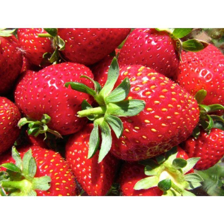 Jordbær 'Korona' 6-pakk