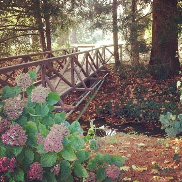 Sárvári Arborétumban mindig jól esik egy séta. #nature #wellness #tree Sárvár