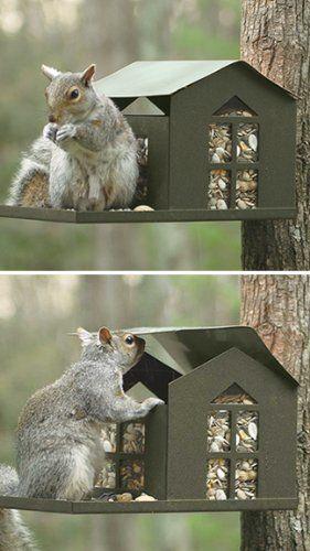 Best 25 Squirrel Feeder Ideas On Pinterest Useful