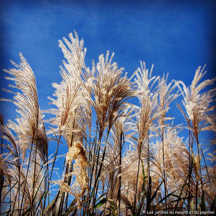 Le jardin Plume en automne | Jardins et Automne