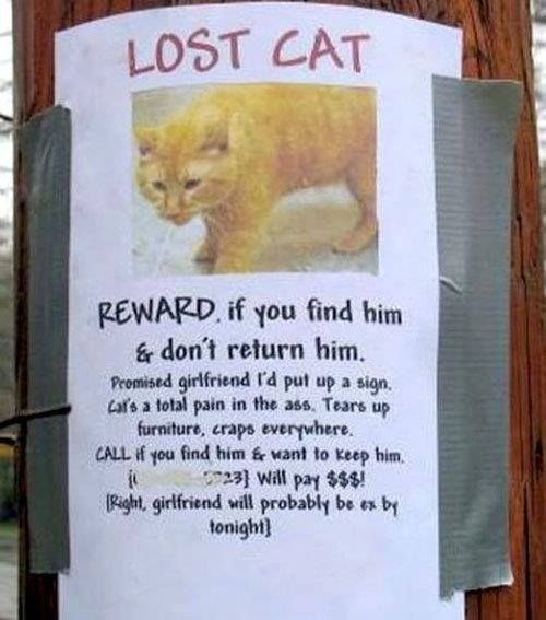 The 25 best ideas about Missing Cat Poster – Make a Missing Poster