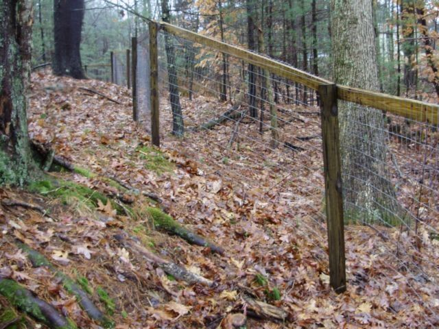 Make Your Own Goat Proof Fence I Need A Farm Pinterest