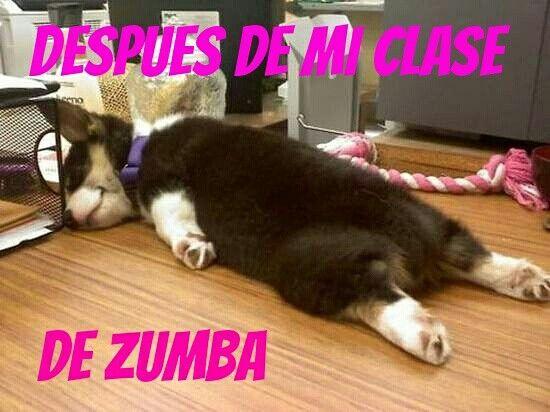 Funny Memes Zumba : Best zumba images zumba funny stuff and animal