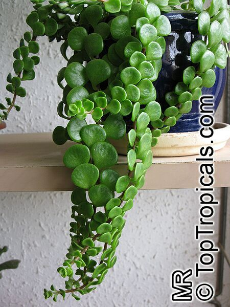 268 best succulents images on pinterest gardening 7 uncommon indoor plants