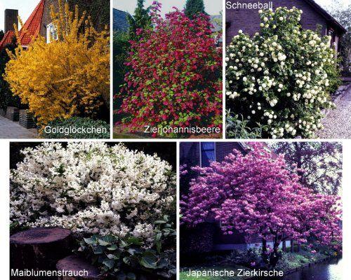 Blütenhecke XL, 5 Pflanzen, bestehend aus je 1 Strauch der Sorte Maiblumenstrauch weiß blühend, Goldglöckchen gelb blühend, Zierjohannisbeere rot blühend, Schneeball weiß blühend, Japanische Zierkirsche rosa blühend Dominik Gartenparadies http://www.amazon.de/dp/B003CQ9PSW/ref=cm_sw_r_pi_dp_b9gevb0AMTGC4