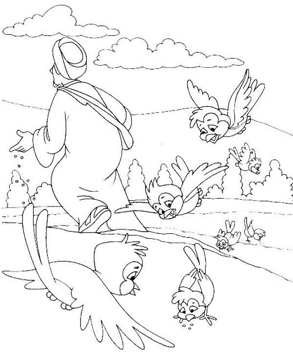 tornillo seed coloring pages - photo#18