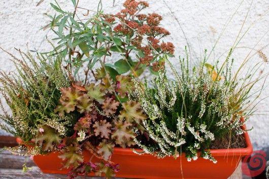 composizioni floreali per le fioriere invernali: decorazioni balcone, terrazzo…