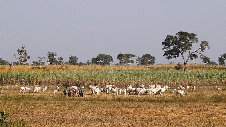 Accaparement de terres en Afrique : Vincent Bolloré encore débouté contre Bastamag