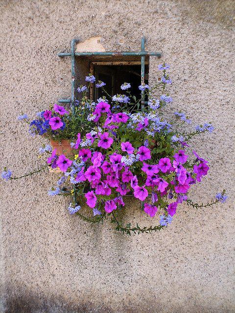 Janela e flores na região da Alsácia, França.  Fotografia: Annina - anna.deho no Flickr.