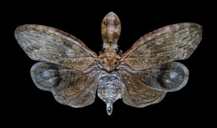 Science Friday podcast: A new study pieces together the puzzle of insect evolution (Misof et al., 2014)