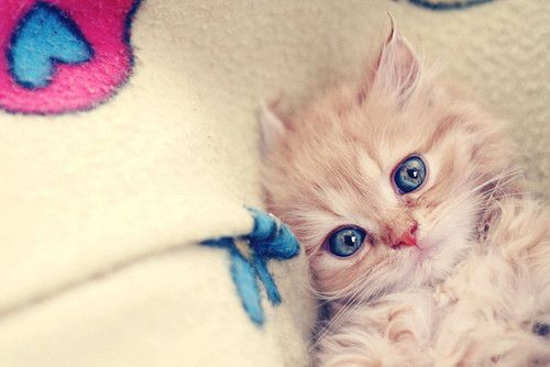 kittenFunny Kitty, Baby Blue, Kitty Cat, Cat Eye, Baby Kittens, Inspiration Pictures, Blue Eye, Crazy Eye, Baby Cat