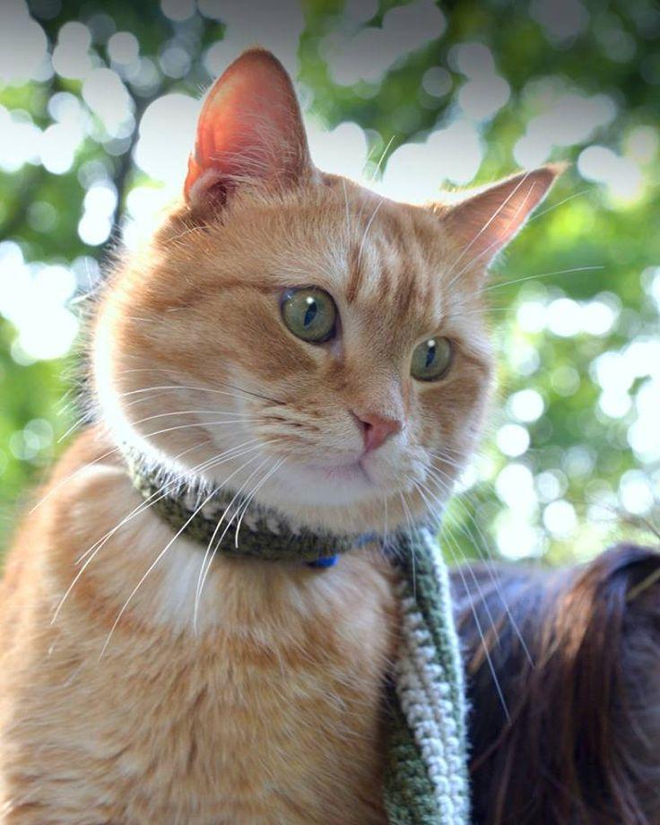 Wonderful Bob... the street cat :)