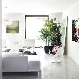 polished concrete floor, indoor plants <3