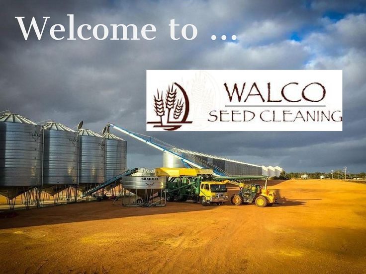 The Best #Services for #Seed #Cleaning in #Booleroo  http://www.walcoseed.com.au/ - We at Walco seeds believe that every farmer should have the right to use the best seeds for their farms.