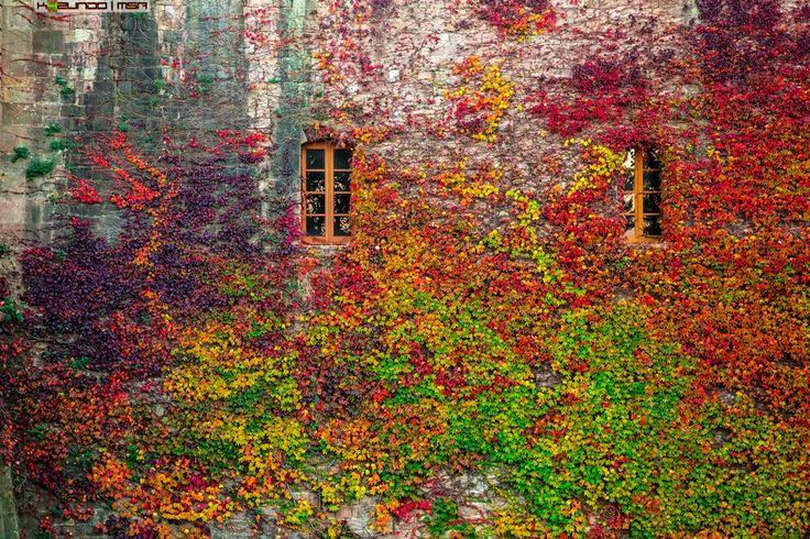 Ну и самая самая цветовая бомба это фото ниже. Да и вообще как по мне так мое очень удачное фото и даже со смыслом. Плющ на замке, гора Montjuck. Прям осень-зима.