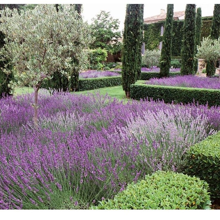Menu For Olive Garden: 1000+ Ideas About Italian Cypress Trees On Pinterest