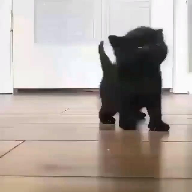Little black kitten – Cool Cat Tree House – Kareena Banfill-Beckner
