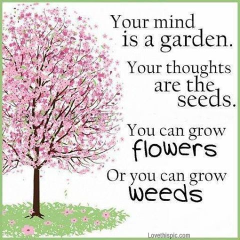 flowers or weeds life quotes quotes positive quotes quote life quote positive quote
