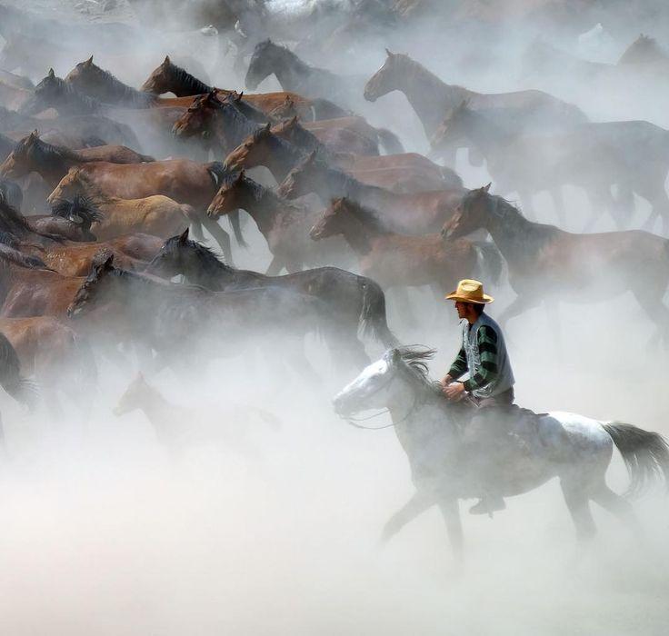 Photo by Faruk Akbaş | X-T2 | XF18-135mmF3.5-5.6 R LM OIS WR | F5.6 | 1/1000sec | ISO200 #fujifilm #xseries #xphotographer #horse