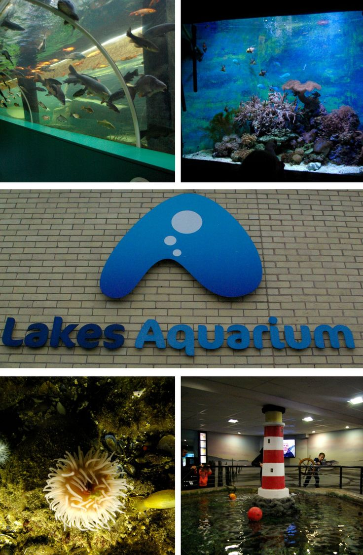 Lakes Aquarium is a fantastic stopping point on Windermere Lake Cruises, and is the perfect size for introducing young children to sea life