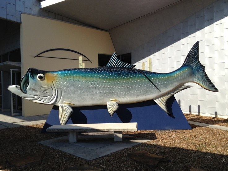 13 best images about florida gulf coast center for fishing for Florida gulf coast fishing