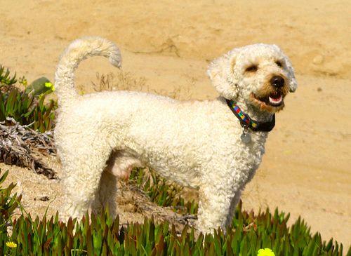 que lindo perrito :)