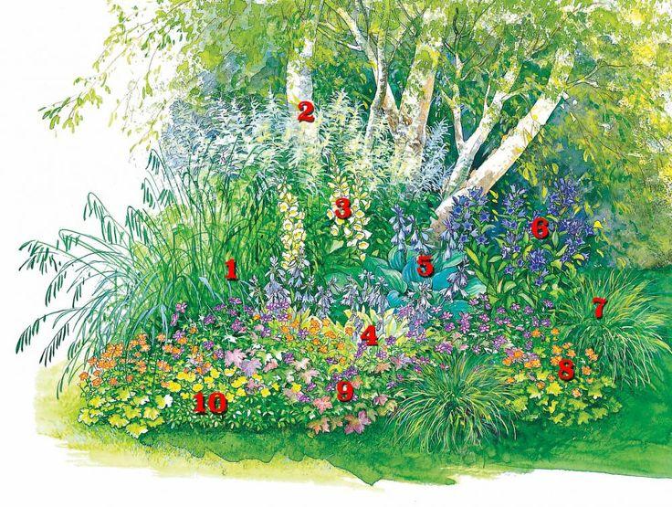 Die besten 25+ Pflanzen für schatten Ideen auf Pinterest - indoor garten anlegen geeignete pflanzen