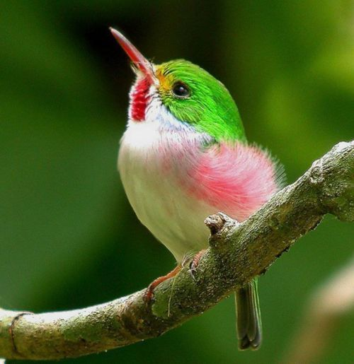♥ Sweet Little Hummingbird!