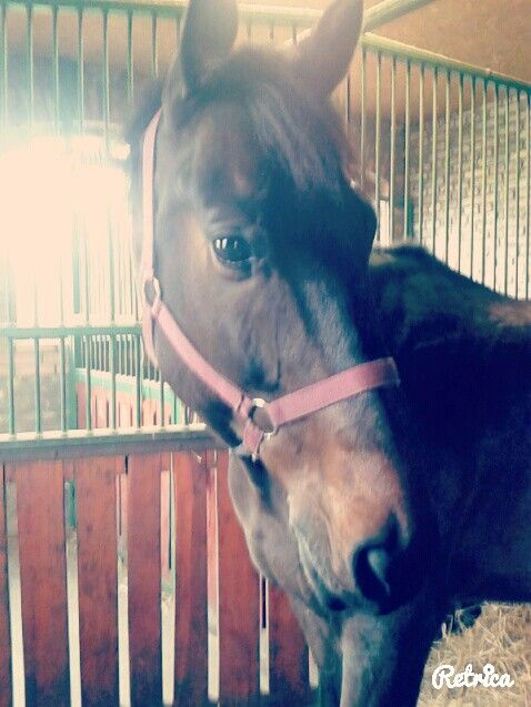 This is my horse it's a beautiful and very clever....