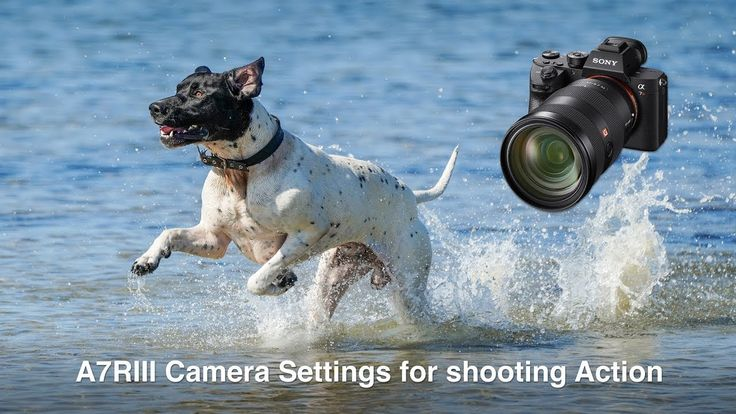 Set up and Save the optimum custom camera settings for action, wildlife and sports photography on a sony Alpha A7RIII mirrorless camera