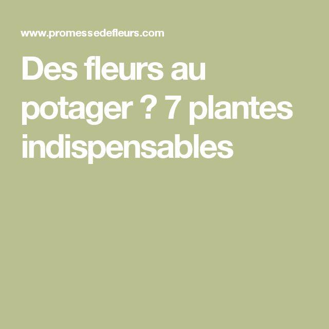 Des fleurs au potager ? 7 plantes indispensables