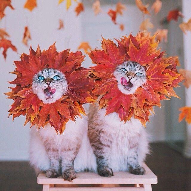 Oh so cute Fall Kitties: