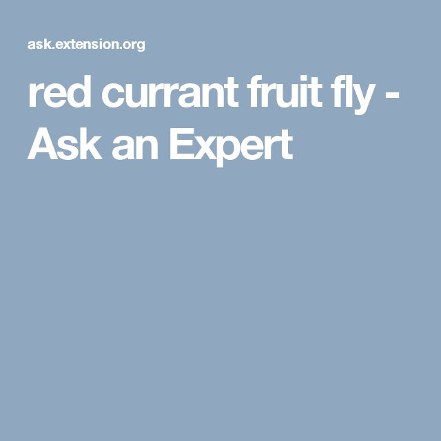 red currant fruit fly - Ask an Expert