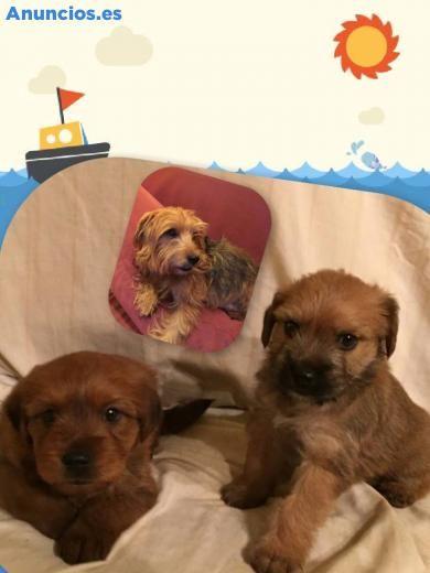 Buscan Hogar - Perros pequeños en Asturias.
